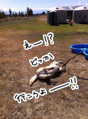 羊の国のラブラドール絵日記シニア!!「命からがら土曜日」5