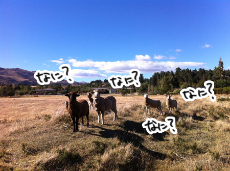羊の国のラブラドール絵日記シニア!!「命からがら土曜日」7