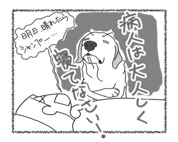 羊の国のラブラドール絵日記シニア!!「風邪のため延期」4