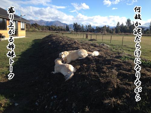 羊の国のラブラドール絵日記シニア!!「風邪のため延期」写真2