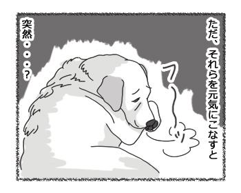 羊の国のラブラドール絵日記シニア!!「ビフォー&アフター」3