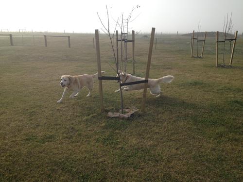 羊の国のラブラドール絵日記シニア!!「ゾーイとエビス」写真4