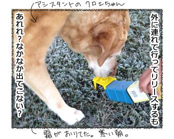 羊の国のラブラドール絵日記シニア!!「キャッチ&リリース」2