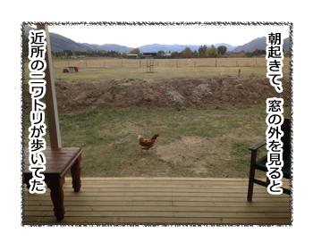 羊の国のラブラドール絵日記シニア!!「エキサイティング朝」1