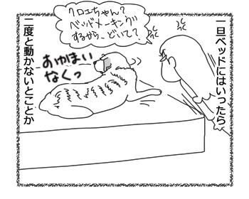 羊の国のラブラドール絵日記シニア!!「どうぞおかまいなく」2