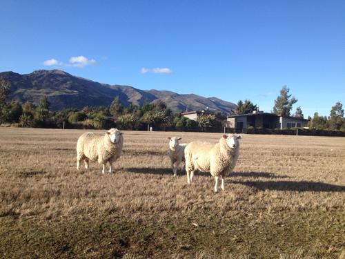 羊の国のラブラドール絵日記シニア!!「来週の準備」1
