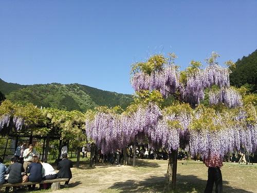 fujikouen3.jpg