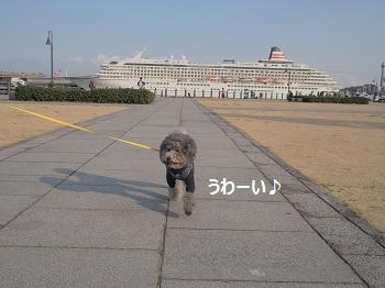 ジジ赤レンガ倉庫20140309-2