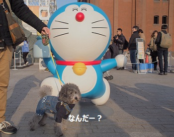 ジジ赤レンガ倉庫20140309-7