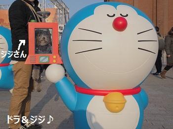 ジジ赤レンガ倉庫20140309-9