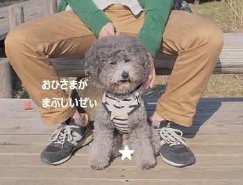 てくてくじじさんぽ-3