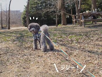 じじのこうえん20140315-11