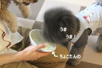 ちょこたんちで夜ご飯20140517-10