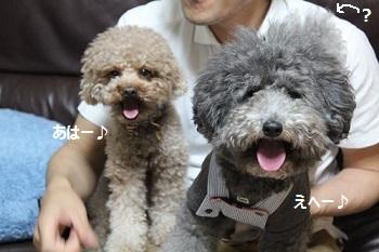 ちょこたん家20140517-5