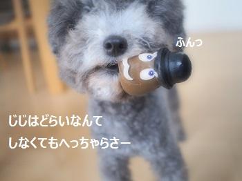 ジジさん脱走20140607-4
