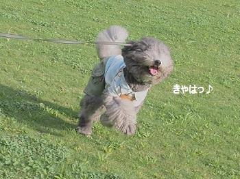 いつもの公園20140823-3