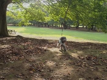 いつもの公園20140823-5