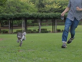 いつもの公園20140823-6