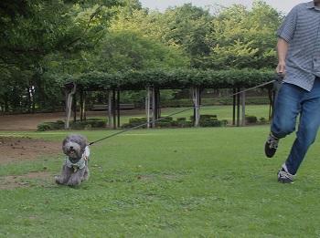 いつもの公園20140823-7