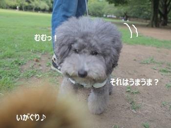 いつもの公園20140823-9-