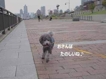 P4132453.jpg