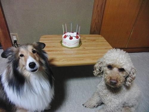 ケーキちょうだい
