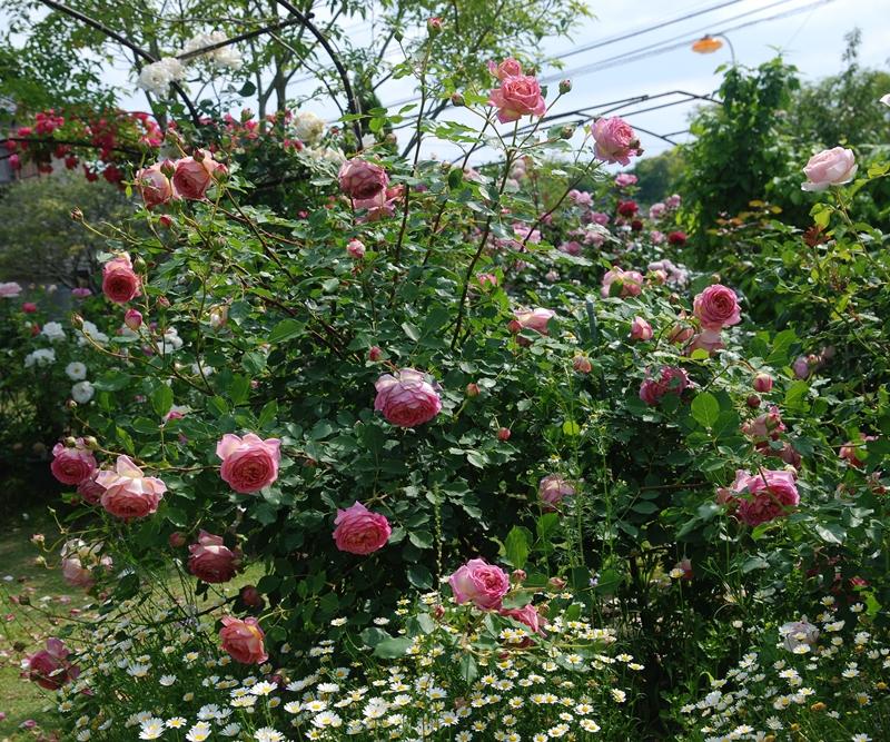 DSC_0044_2014_5_11.jpg