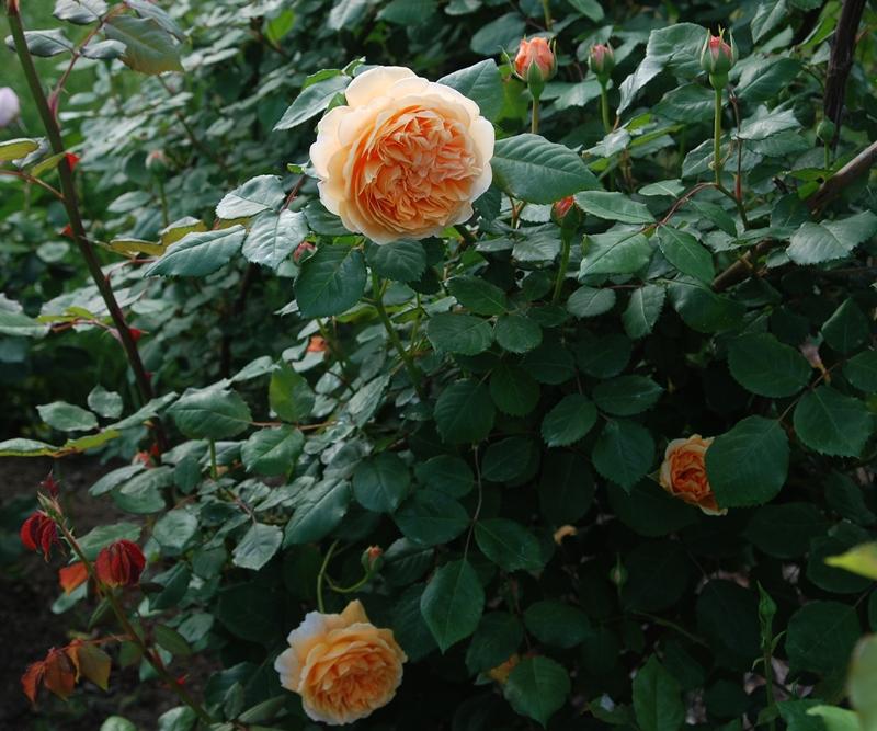 DSC_0066_2014_4_25.jpg