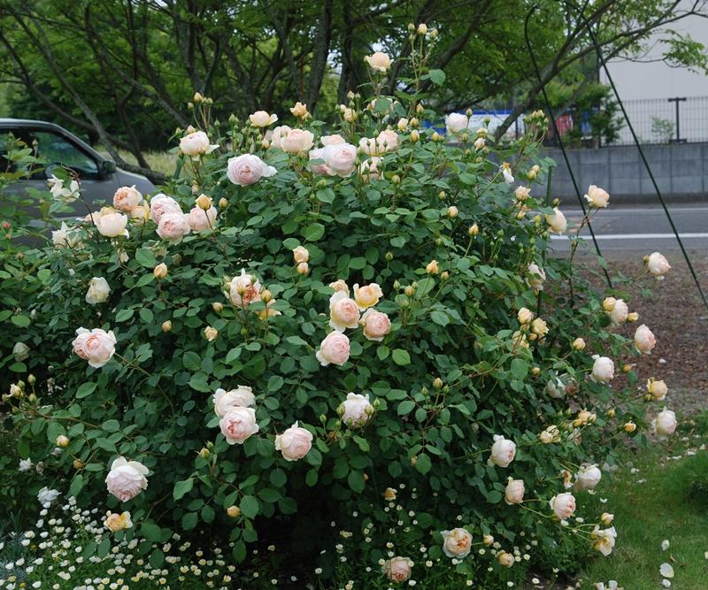 DSC_0917_2014_5_8.jpg