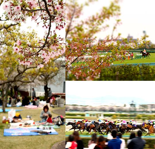 お花見競馬2