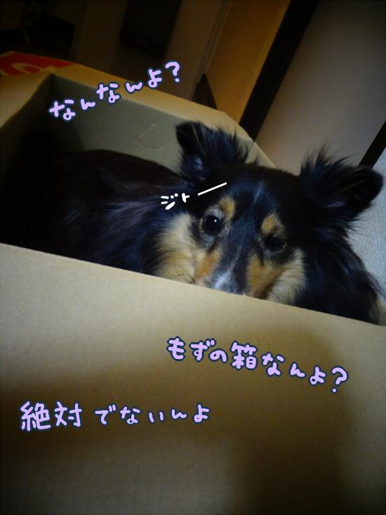 20140703_3.jpg