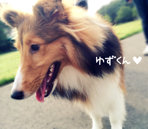 S__4259846.jpg