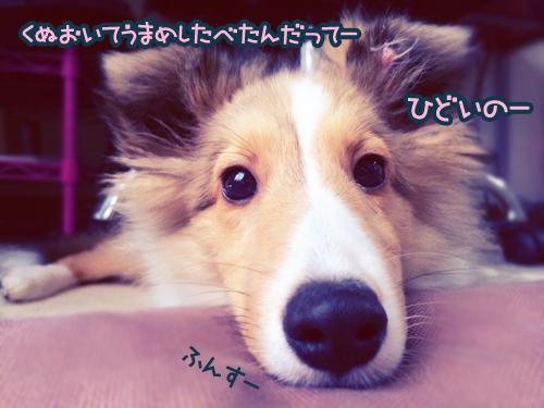 S__4784154.jpg