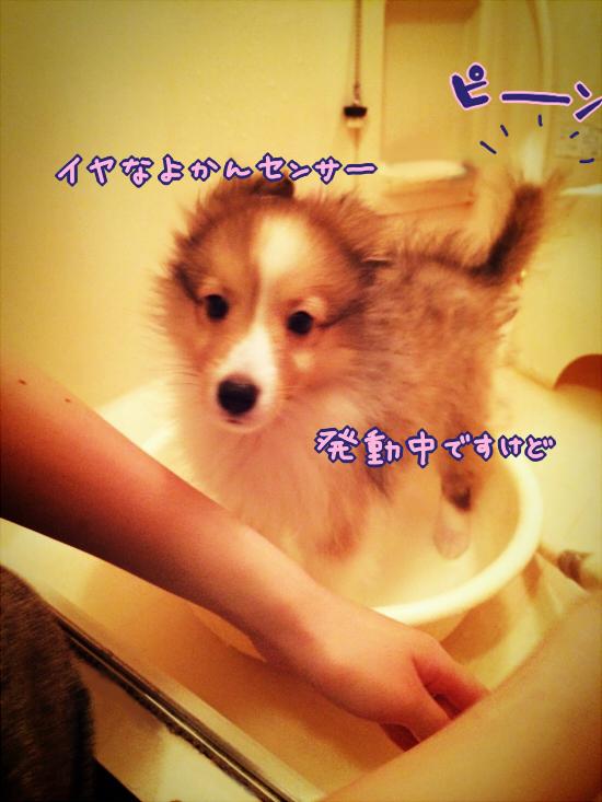 hatuhuro2.jpg