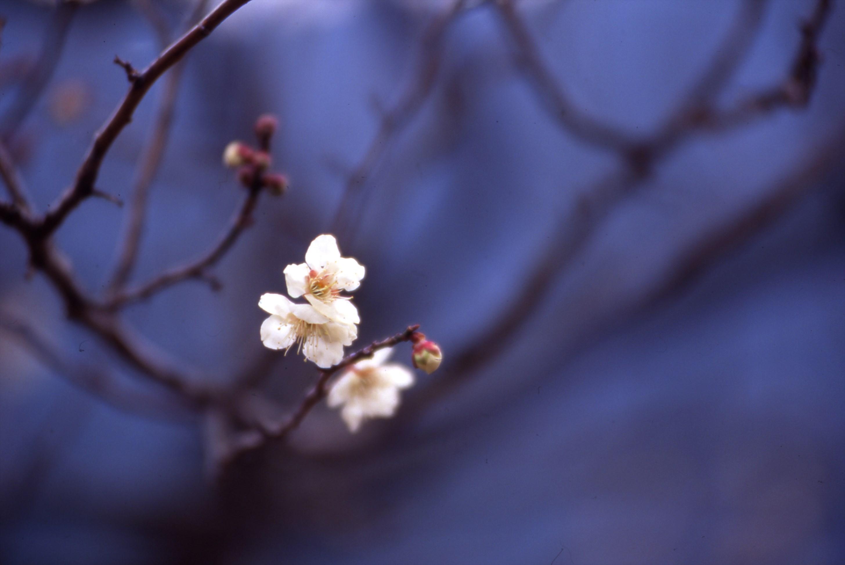 aogaki8_R.jpg