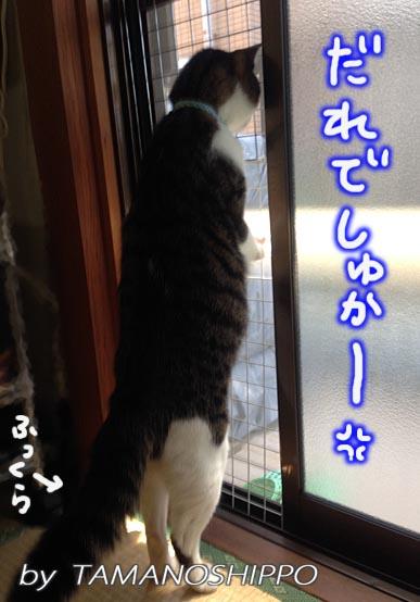 後ろ足で立つ猫(本当は威嚇寸前)