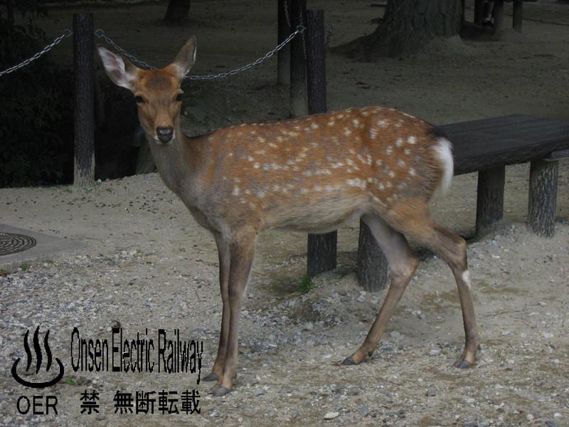 blog_import_540d68519e862.jpg