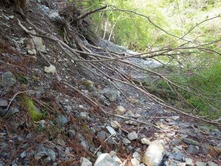 IMGP1325 倒木