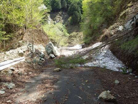 IMGP1361 雪崩 倒木