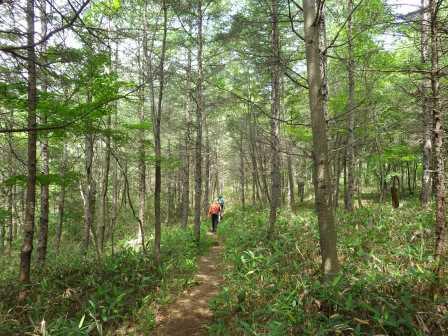 IMGP1504 カラマツ林を進む