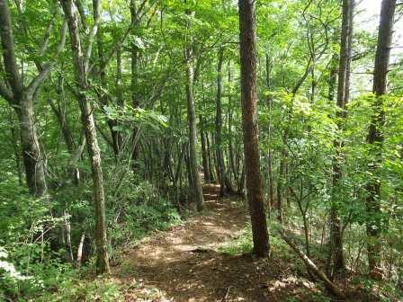 IMGP1677 樹林帯