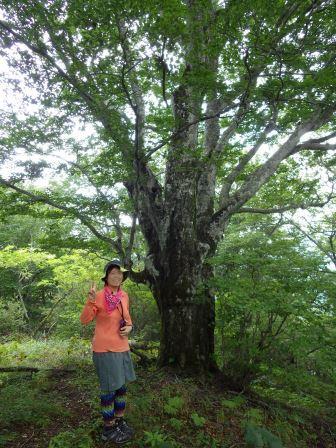 IMGP1722 ブナの巨木