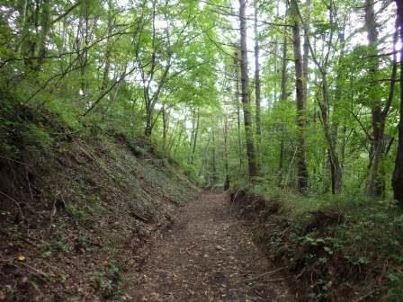 IMGP1741 林道を下る