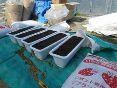 [写真]親苗のプランターに土を入れたところ