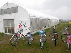 [写真]受付ハウス脇に駐輪した5台の自転車