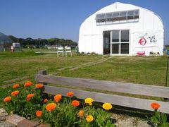 [写真]ポレポレ農園正面入口に植えたキンセンカ越しに見る受付ハウス