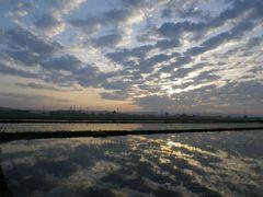 [写真]早朝5時半、農園前の田んぼの水面に空の雲が映っている様子