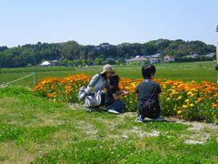 [写真]友人家族がキンセンカの花摘みをしている様子