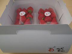 [写真]ポレポレ農園贈答用ボックス(紅ほっぺ・2パック入り)