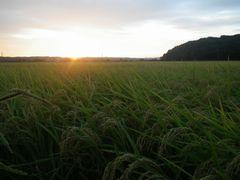 [写真]農園前の田んぼ越しに見る日の出(早朝5時)